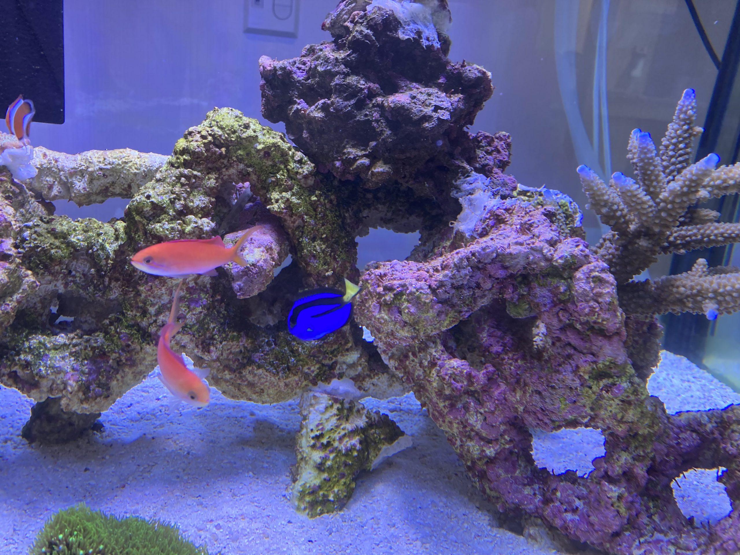 グループ本社のエントランスに珊瑚とニモがやってきました